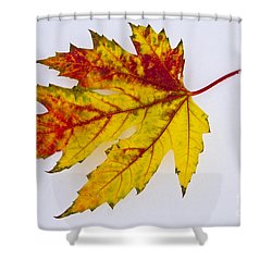 Changing Autumn Leaf In The Snow Shower Curtain by James BO  Insogna