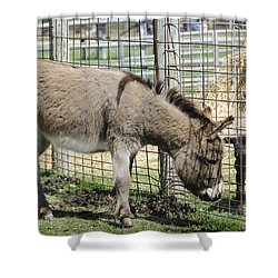 Checking Out The New Kids On The Block Shower Curtain by LeeAnn McLaneGoetz McLaneGoetzStudioLLCcom