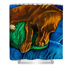 Chocolate Lab On Couch Shower Curtain by Roger Wedegis