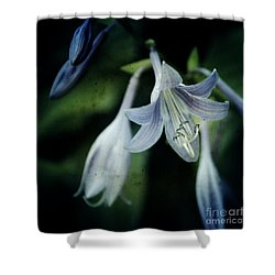 Cladis 02s Shower Curtain by Variance Collections