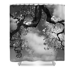 Cloudy Oak Shower Curtain by Laurie Search