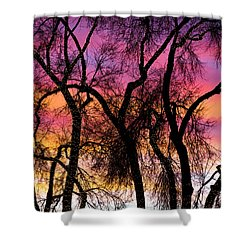 Colorful Silhouetted Trees 27 Shower Curtain by James BO  Insogna
