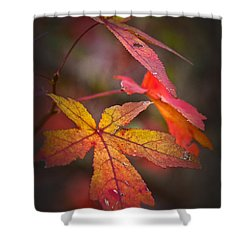 Colors Shower Curtain by Karol Livote