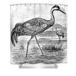 Common Crane Shower Curtain by Granger