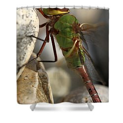 Common Green Darner Dragonfly Shower Curtain by Juergen Roth