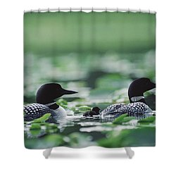 Common Loon Gavia Immer Mated Couple Shower Curtain by Michael Quinton