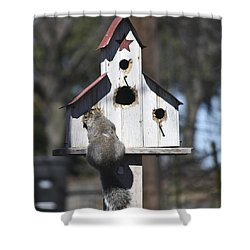 Contemplation Shower Curtain by Teresa Mucha