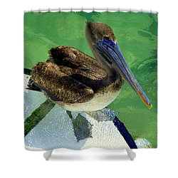 Cool Footed Pelican Shower Curtain by Karen Wiles