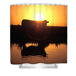 Cow At Sundown Shower Curtain by Picture Partners and Photo Researchers