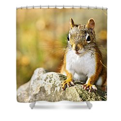 Cute Red Squirrel Closeup Shower Curtain by Elena Elisseeva