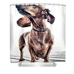Dachshund Shower Curtain by Stelios Kleanthous