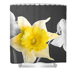 Daffodil Trio  Shower Curtain by Cheryl Young