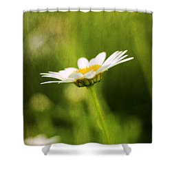 Daisy Shower Curtain by Darren Fisher