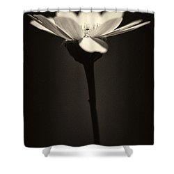 Daisy Flower Monochrome Shower Curtain by Stelios Kleanthous