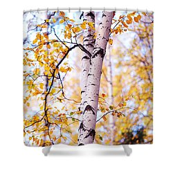Dancing Birches Shower Curtain by Jenny Rainbow