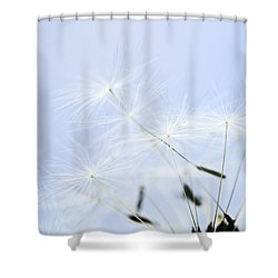 Dandelion Shower Curtain by Elena Elisseeva
