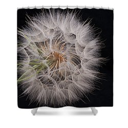 Dandelion Silhouette Shower Curtain by Ivelina G