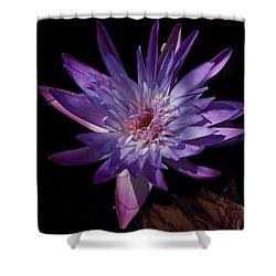 Dark Beauty Shower Curtain by Joseph Yarbrough