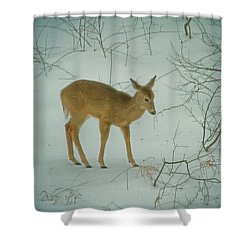 Deer Winter Shower Curtain by Karol Livote