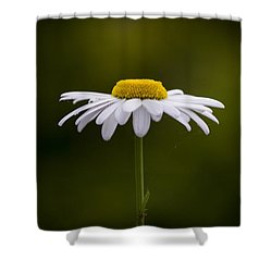 Defiant Daisy Shower Curtain by Clare Bambers