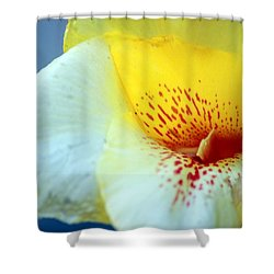 Delicate Shower Curtain by Leigh Meredith