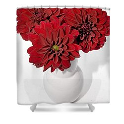 Dhalia On White Shower Curtain by Susan Smith