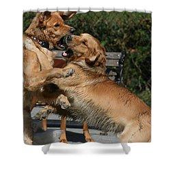 Dog Playground Shower Curtain by Valia Bradshaw