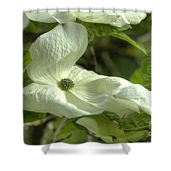 Dogwood Shower Curtain by Rod Wiens