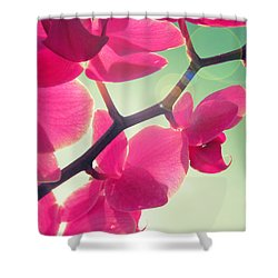 Dolce Shower Curtain by Amy Tyler
