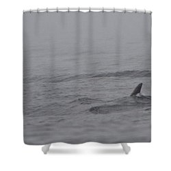 Dolphins In The Mist  Shower Curtain by Bruce J Robinson
