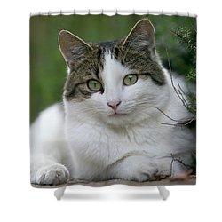 Domestic Cat Felis Catus Portrait Shower Curtain by Cyril Ruoso