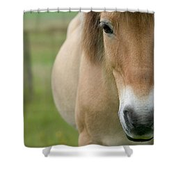 Domestic Horse Equus Caballus Portrait Shower Curtain by Cyril Ruoso