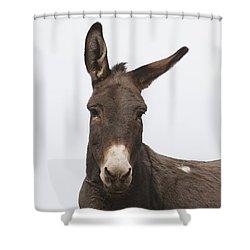 Donkey At The Hajigak Pass, Vardak Shower Curtain by Peter Langer