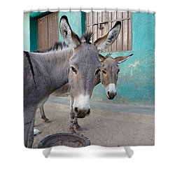 Donkeys, Harar, Ethiopia, Africa Shower Curtain by David DuChemin