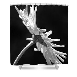 Dramatic Daisy Flower Black And White Shower Curtain by Jennie Marie Schell