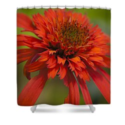 Dreamy Hot Papaya Coneflower Bloom Shower Curtain by Teresa Mucha