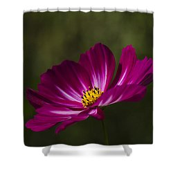 Dreamy Pink Cosmos Shower Curtain by Clare Bambers
