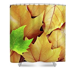 Dry Fall Leaves Shower Curtain by Carlos Caetano