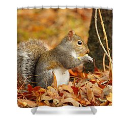 Eastern Grey Squirrel Shower Curtain by Andrew McInnes