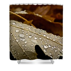 End Of Season Shower Curtain by Susan Herber