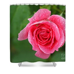 English Rose Shower Curtain by Bonnie Sue Rauch and Photo Researchers