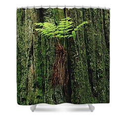 Epiphytic Fern Growing On Redwood Shower Curtain by Gerry Ellis