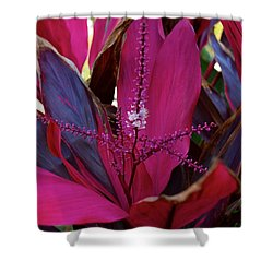 Explosion Shower Curtain by Joseph Yarbrough