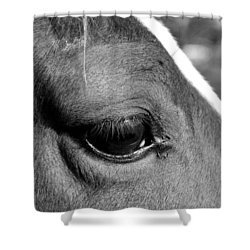 Eye Of The Horse Black And White Shower Curtain by Sandi OReilly