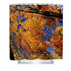 Fall Maple Treetops Shower Curtain by Elena Elisseeva