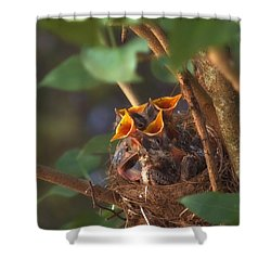 Feeding Time Shower Curtain by Joann Vitali