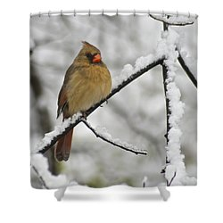 Female Cardinal 3656 Shower Curtain by Michael Peychich