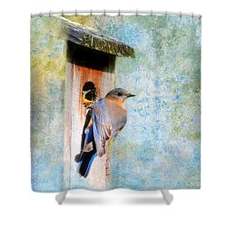 Female Eastern Bluebird At Nesting Box Shower Curtain by Jai Johnson