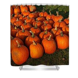Field Of Pumpkins Shower Curtain by LeeAnn McLaneGoetz McLaneGoetzStudioLLCcom