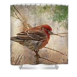 Finch Art Or Greeting Card Blank Shower Curtain by Debbie Portwood